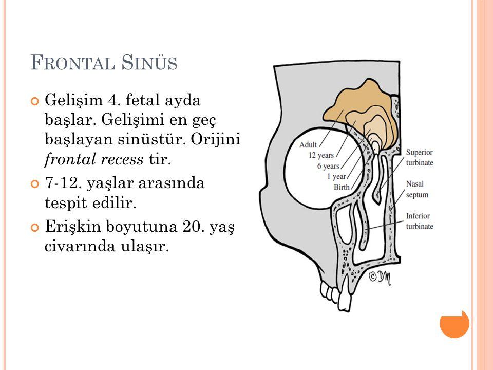 F RONTAL S INÜS Gelişim 4.fetal ayda başlar. Gelişimi en geç başlayan sinüstür.