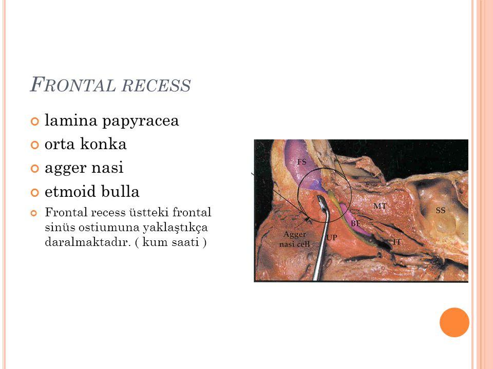 F RONTAL RECESS lamina papyracea orta konka agger nasi etmoid bulla Frontal recess üstteki frontal sinüs ostiumuna yaklaştıkça daralmaktadır.
