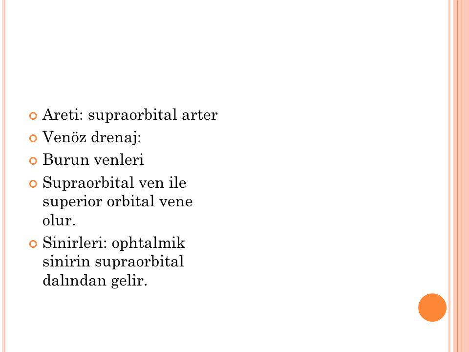 Areti: supraorbital arter Venöz drenaj: Burun venleri Supraorbital ven ile superior orbital vene olur. Sinirleri: ophtalmik sinirin supraorbital dalın