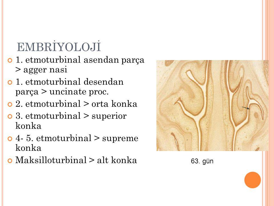 EMBRİYOLOJİ 1. etmoturbinal asendan parça > agger nasi 1. etmoturbinal desendan parça > uncinate proc. 2. etmoturbinal > orta konka 3. etmoturbinal >