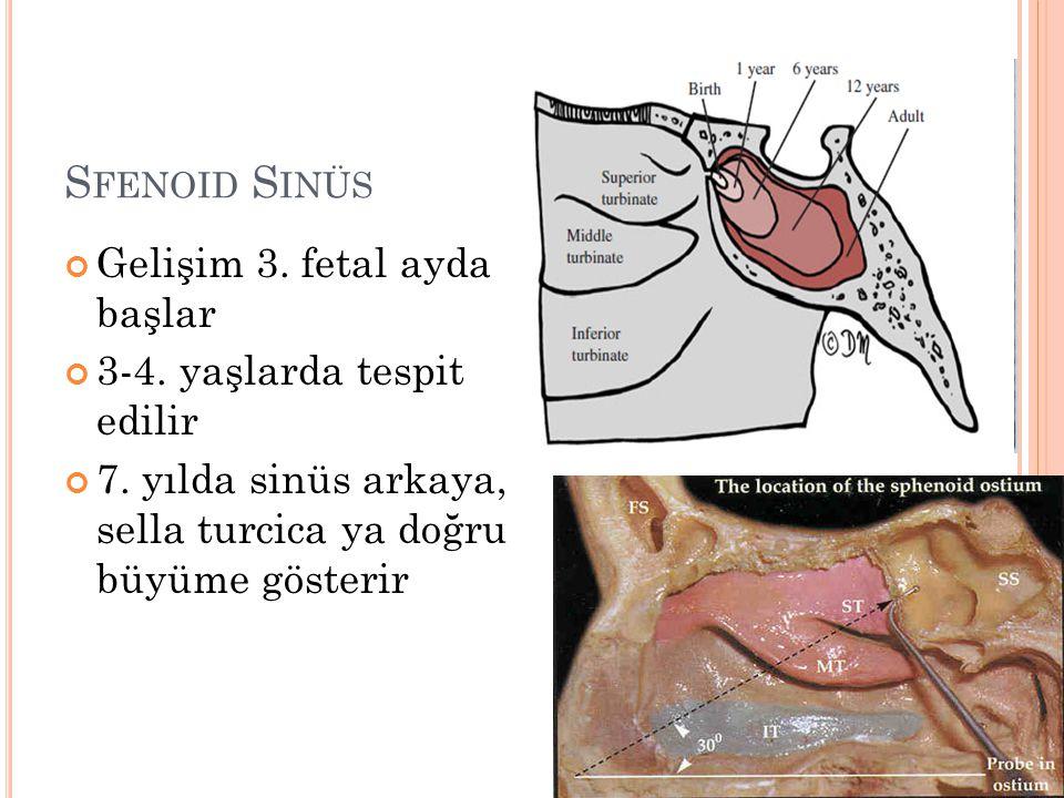 S FENOID S INÜS Gelişim 3. fetal ayda başlar 3-4. yaşlarda tespit edilir 7. yılda sinüs arkaya, sella turcica ya doğru büyüme gösterir