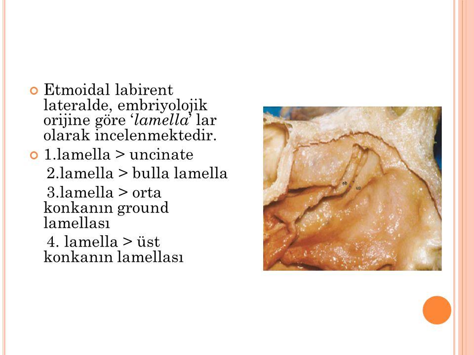 Etmoidal labirent lateralde, embriyolojik orijine göre ' lamella ' lar olarak incelenmektedir. 1.lamella > uncinate 2.lamella > bulla lamella 3.lamell