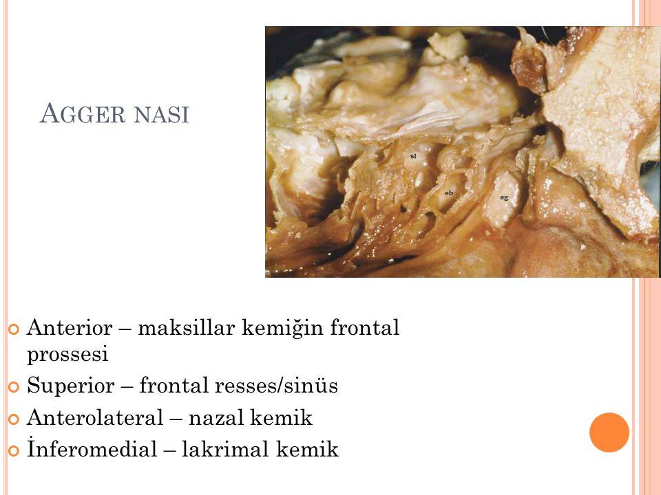 A GGER NASI Anterior – maksillar kemiğin frontal prossesi Superior – frontal resses/sinüs Anterolateral – nazal kemik İnferomedial – lakrimal kemik