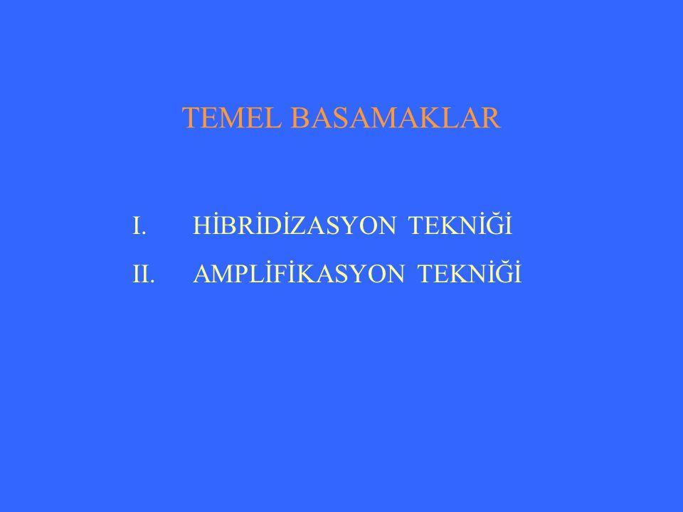 TEMEL BASAMAKLAR I.HİBRİDİZASYON TEKNİĞİ II.AMPLİFİKASYON TEKNİĞİ