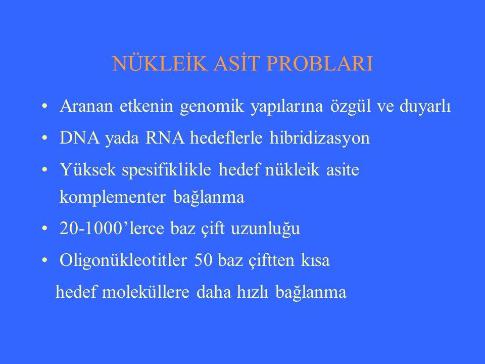 HİBRİDİZASYON YÖNTEMLERİ I.Katı fazlı hibridizasyon Dot blot Southern blot Northern blot II.Sıvı fazlı hibridizasyon III.İn-situ hibridizasyon