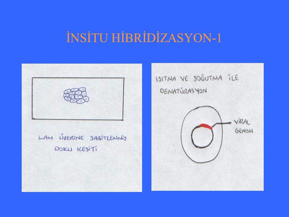 HBV DNA HİBRİDİZASYON TESTİ-1