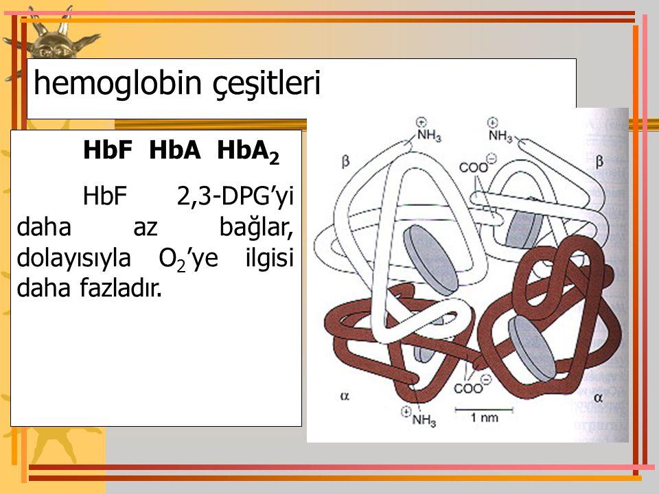 hemoglobin çeşitleri HbF HbA HbA 2 HbF 2,3-DPG'yi daha az bağlar, dolayısıyla O 2 'ye ilgisi daha fazladır.