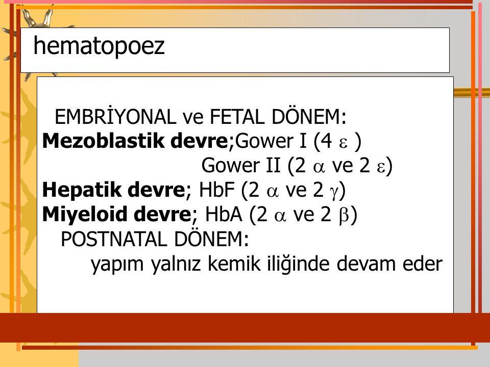 hematopoez EMBRİYONAL ve FETAL DÖNEM: Mezoblastik devre;Gower I (4  ) Gower II (2  ve 2  ) Hepatik devre; HbF (2  ve 2  ) Miyeloid devre; HbA (2