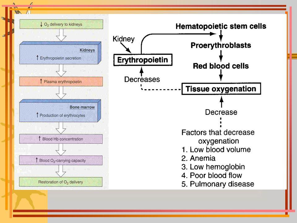 hemoglobin bileşikleri oksihemoglobin: oksijeni bağlamış olan hemoglobindir; hemoglobindeki her demire bir oksijen bağlanabilir (toplam 4) methemoglobin: oksidasyon sonucu ferro demiri ferri'ye dönüşen hemoglobindir; oksijen bağlayamaz, siyanoza yol açar karboksihemoglobin: karbonmonoksit ile bağlanmış hemoglobindir (HbCO); Hb'nin CO'ya afinitesi O 2 'den 250 kat fazladır