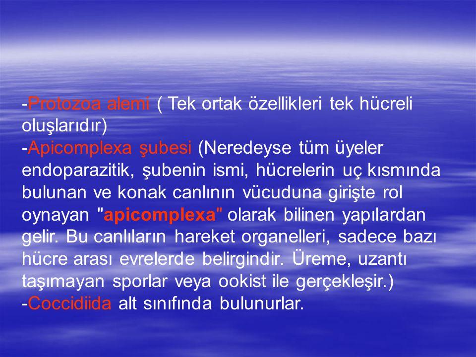 -Protozoa alemi ( Tek ortak özellikleri tek hücreli oluşlarıdır) -Apicomplexa şubesi (Neredeyse tüm üyeler endoparazitik, şubenin ismi, hücrelerin uç