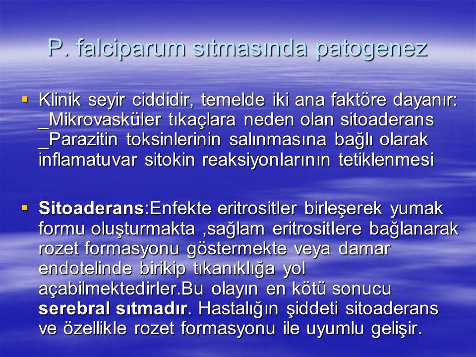 P. falciparum sıtmasında patogenez  Klinik seyir ciddidir, temelde iki ana faktöre dayanır: _Mikrovasküler tıkaçlara neden olan sitoaderans _Paraziti