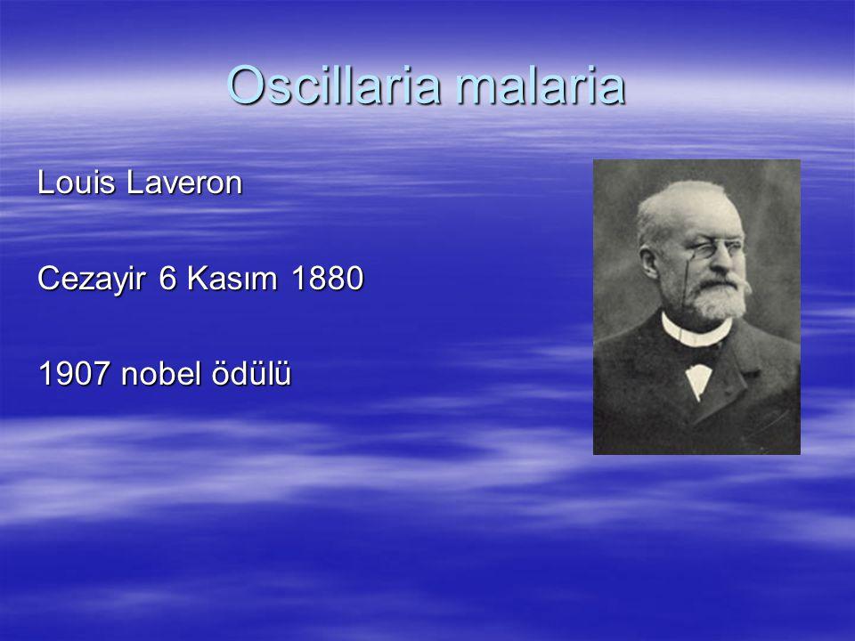 Oscillaria malaria Louis Laveron Cezayir 6 Kasım 1880 1907 nobel ödülü