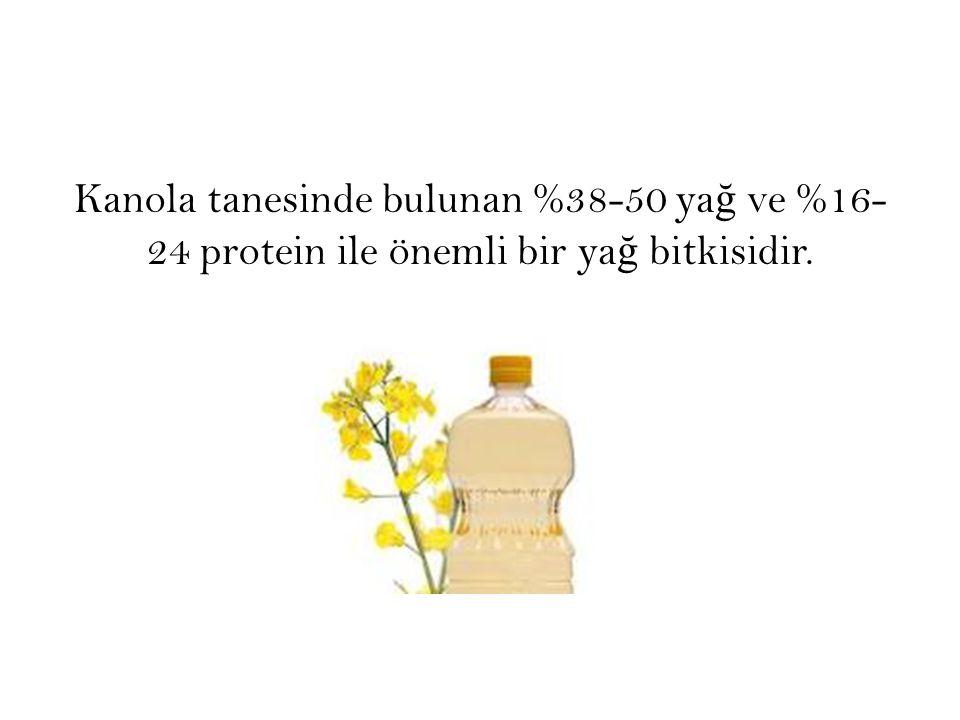 Kanola tanesinde bulunan %38-50 ya ğ ve %16- 24 protein ile önemli bir ya ğ bitkisidir.