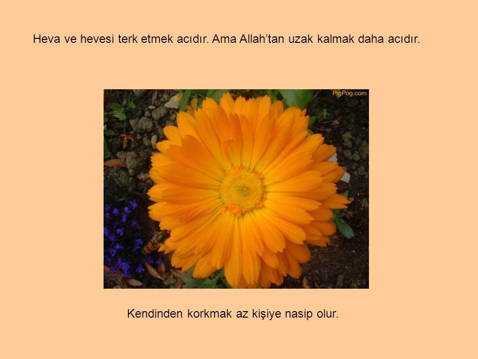 Temiz kişilerin toprağını öpmek; aşağılıkların taht ve bahçesine oturmaktan iyidir.