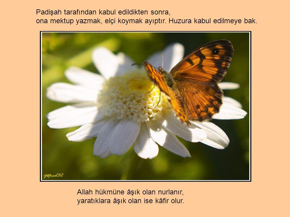 Allah hükmüne âşık olan nurlanır, yaratıklara âşık olan ise kâfir olur.