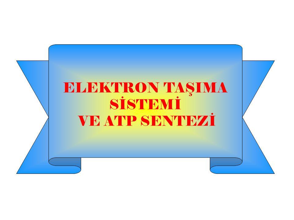 ELEKTRON TAŞIMA SİSTEMİ VE ATP SENTEZİ