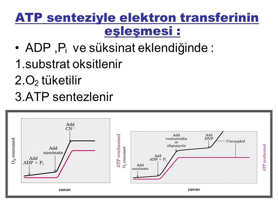 ATP senteziyle elektron transferinin eşleşmesi : ADP,P ve süksinat eklendiğinde : 1.substrat oksitlenir 2.O tüketilir 3.ATP sentezlenir zaman i 2