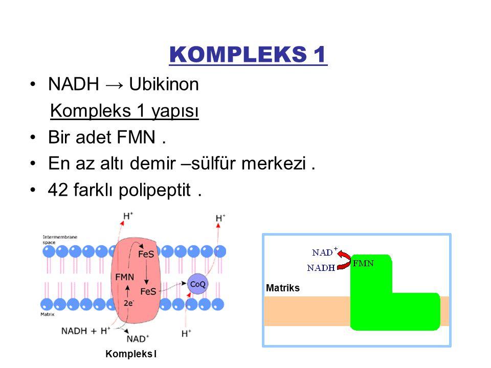 KOMPLEKS 1 NADH → Ubikinon Kompleks 1 yapısı Bir adet FMN. En az altı demir –sülfür merkezi. 42 farklı polipeptit. Matriks Kompleks I
