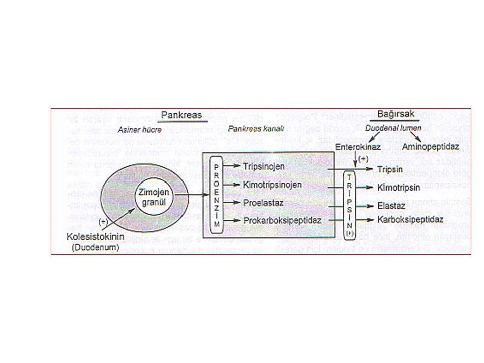 amino asit taşıma sistemleri Taşıyıcı proteinin özelliğine göre en az dört tip amino asit taşıma sistemi vardır: 1) Nötral amino asit taşıma sistemi: Na + -bağımlı nötral A sistemi alanini seçer; aynı zamanda asidik ve bazik amino asitleri de taşır.
