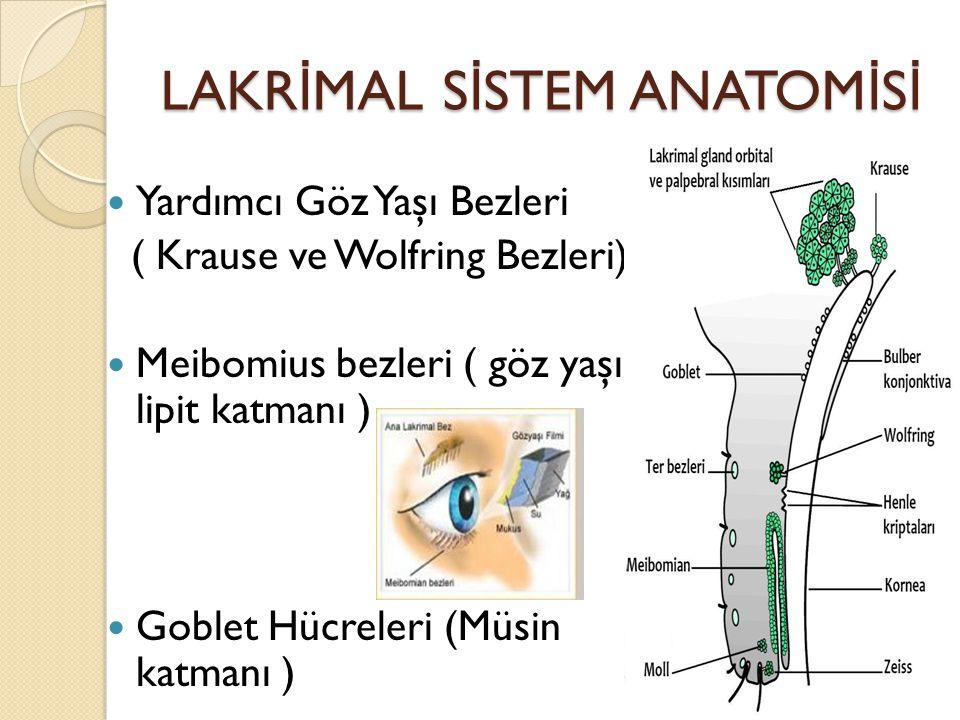 LAKR İ MAL S İ STEM ANATOM İ S İ Yardımcı Göz Yaşı Bezleri ( Krause ve Wolfring Bezleri) Meibomius bezleri ( göz yaşı lipit katmanı ) Goblet Hücreleri