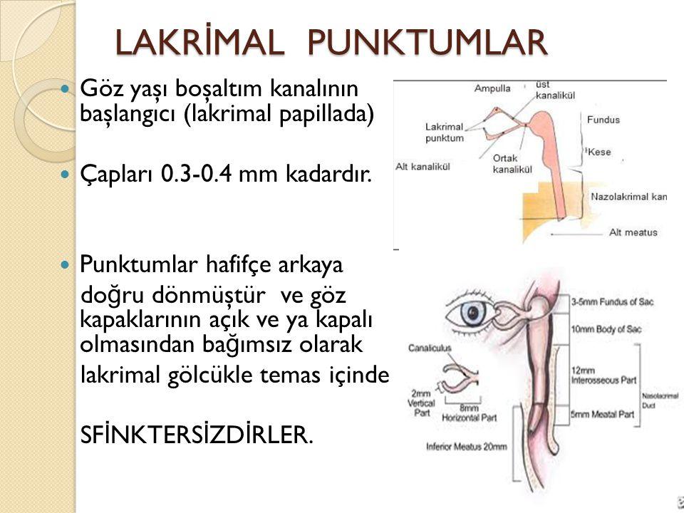 LAKR İ MAL PUNKTUMLAR Göz yaşı boşaltım kanalının başlangıcı (lakrimal papillada) Çapları 0.3-0.4 mm kadardır. Punktumlar hafifçe arkaya do ğ ru dönmü