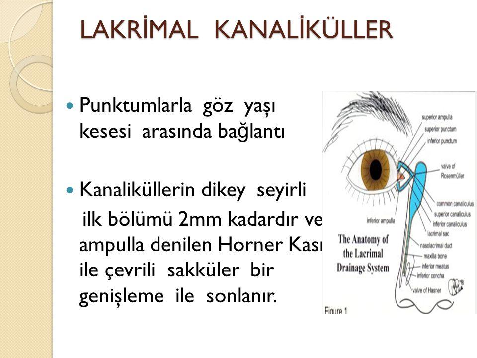 LAKR İ MAL KANAL İ KÜLLER Punktumlarla göz yaşı kesesi arasında ba ğ lantı Kanaliküllerin dikey seyirli ilk bölümü 2mm kadardır ve ampulla denilen Hor