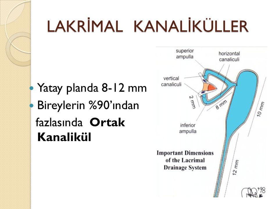 LAKR İ MAL KANAL İ KÜLLER Yatay planda 8-12 mm Bireylerin %90'ından fazlasında Ortak Kanalikül