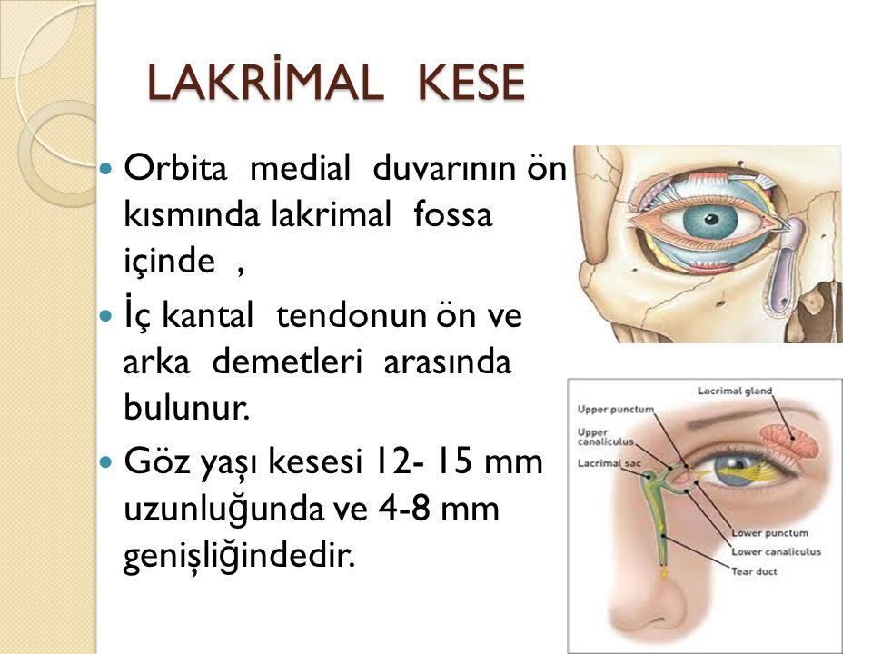 LAKR İ MAL KESE Orbita medial duvarının ön kısmında lakrimal fossa içinde, İ ç kantal tendonun ön ve arka demetleri arasında bulunur. Göz yaşı kesesi