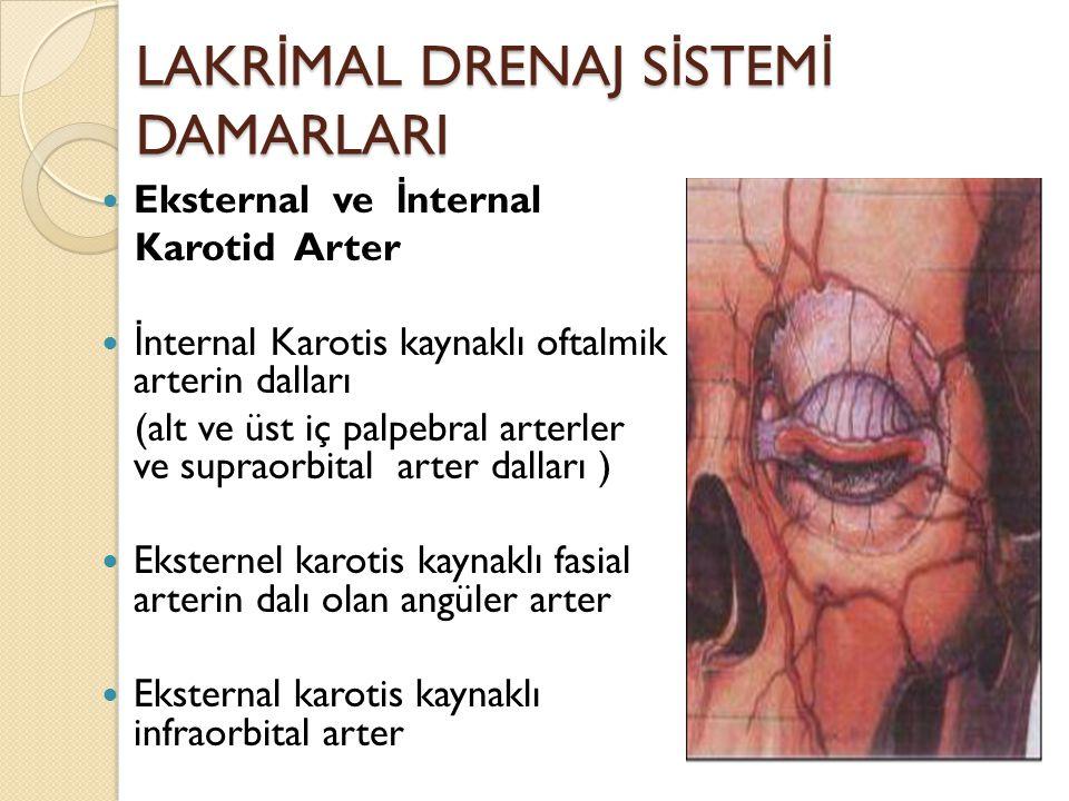 LAKR İ MAL DRENAJ S İ STEM İ DAMARLARI Eksternal ve İ nternal Karotid Arter İ nternal Karotis kaynaklı oftalmik arterin dalları (alt ve üst iç palpebr