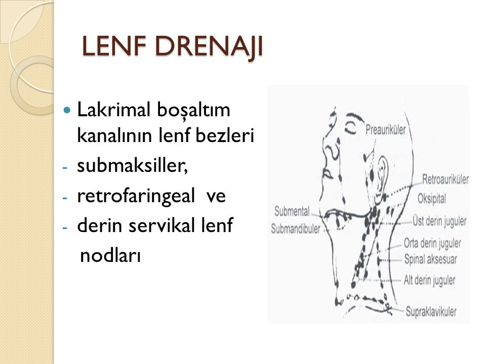 LENF DRENAJI Lakrimal boşaltım kanalının lenf bezleri - submaksiller, - retrofaringeal ve - derin servikal lenf nodları