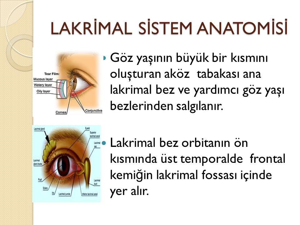 LAKR İ MAL S İ STEM ANATOM İ S İ Göz yaşının büyük bir kısmını oluşturan aköz tabakası ana lakrimal bez ve yardımcı göz yaşı bezlerinden salgılanır. L