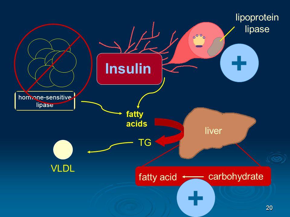 20 fatty acids hormone-sensitive lipase fatty acid carbohydrate liver TG VLDL lipoprotein lipase Insulin + +