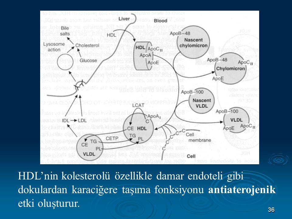 36 HDL'nin kolesterolü özellikle damar endoteli gibi dokulardan karaciğere taşıma fonksiyonu antiaterojenik etki oluşturur.