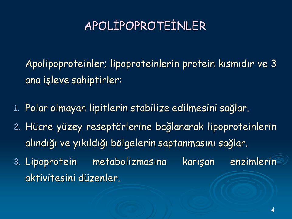 4 APOLİPOPROTEİNLER Apolipoproteinler; lipoproteinlerin protein kısmıdır ve 3 ana işleve sahiptirler: 1. Polar olmayan lipitlerin stabilize edilmesini