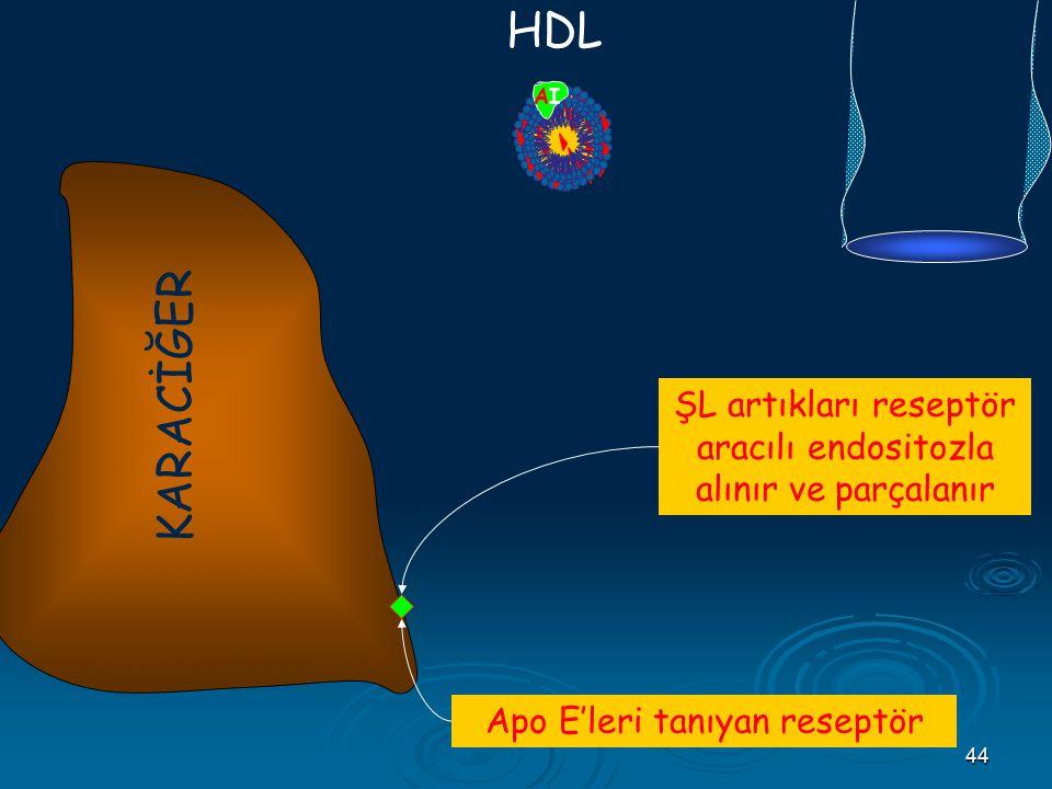44 AIAI B48 CII E HDL Apo E'leri tanıyan reseptör KARACİĞER ŞL artıkları reseptör aracılı endositozla alınır ve parçalanır