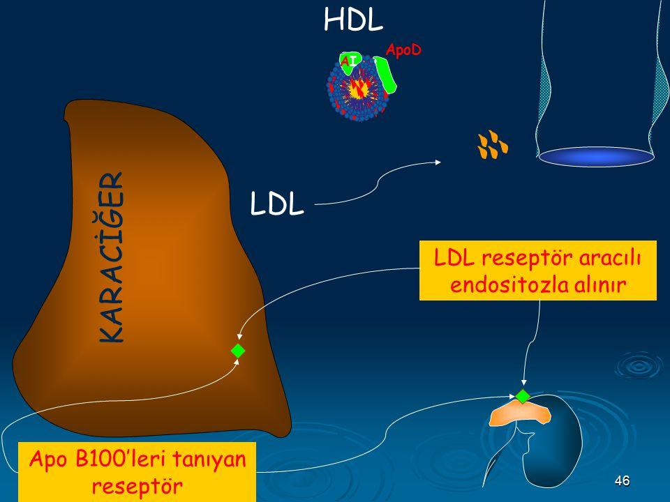 46 AIAI B 100 CII E HDL Apo B100'leri tanıyan reseptör KARACİĞER LDL reseptör aracılı endositozla alınır ApoD LDL