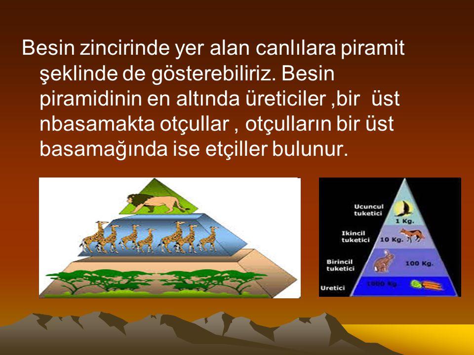 Besin zincirinde yer alan canlılara piramit şeklinde de gösterebiliriz. Besin piramidinin en altında üreticiler,bir üst nbasamakta otçullar, otçulları