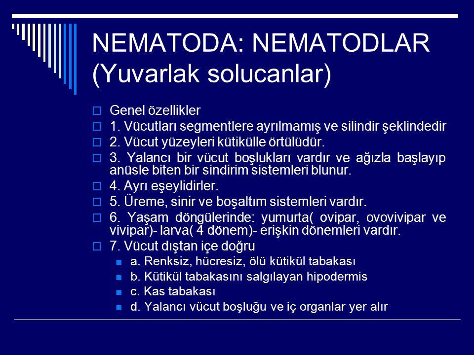 NEMATODA: NEMATODLAR (Yuvarlak solucanlar)  Genel özellikler  1. Vücutları segmentlere ayrılmamış ve silindir şeklindedir  2. Vücut yüzeyleri kütik