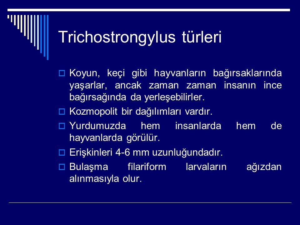 Trichostrongylus türleri  Koyun, keçi gibi hayvanların bağırsaklarında yaşarlar, ancak zaman zaman insanın ince bağırsağında da yerleşebilirler.