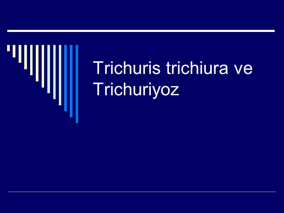 Trichuris trichiura ve Trichuriyoz