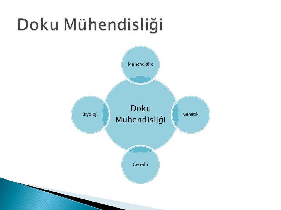 Doku Mühendisliği MühendislikGenetikCerrahiBiyoloji