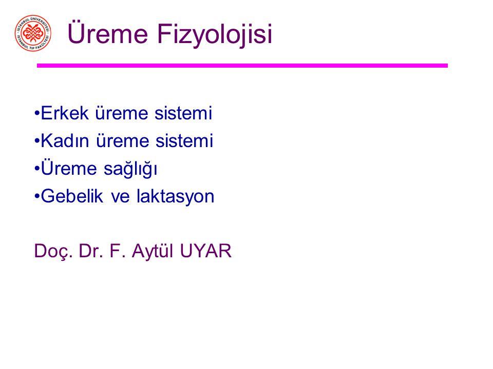 Üreme Fizyolojisi Erkek üreme sistemi Kadın üreme sistemi Üreme sağlığı Gebelik ve laktasyon Doç.