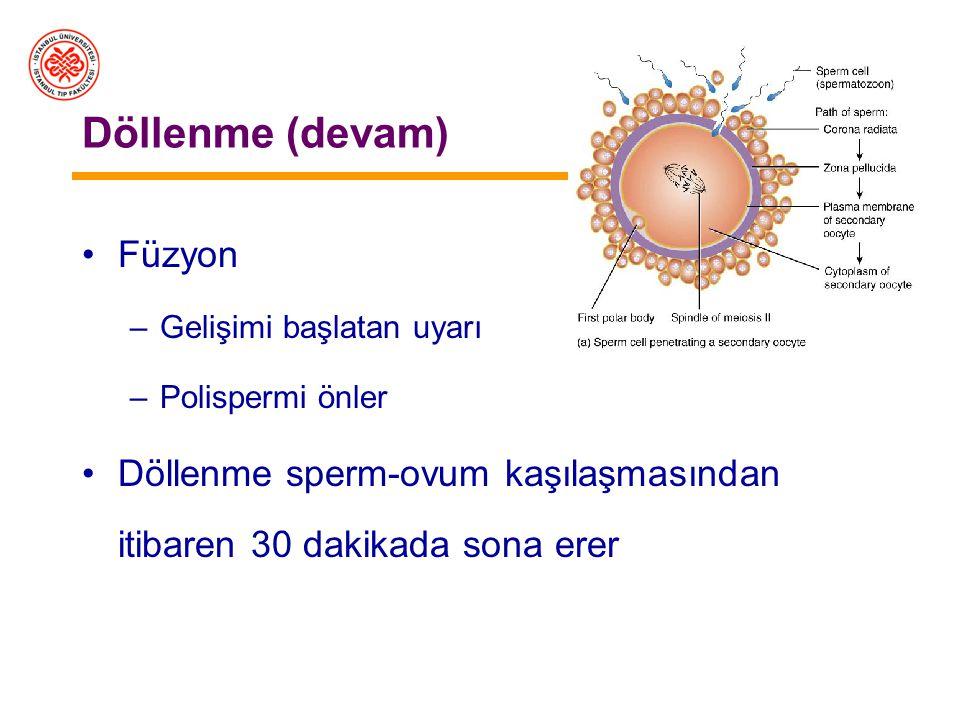 Döllenme Korona radiyatadan geçiş –hiyaluronidaz Zona pellusidadan geçiş –Akrozin vb. proteazlar Sperm zona pellusidadaki reseptöre (ZP3) bağlanır Akr