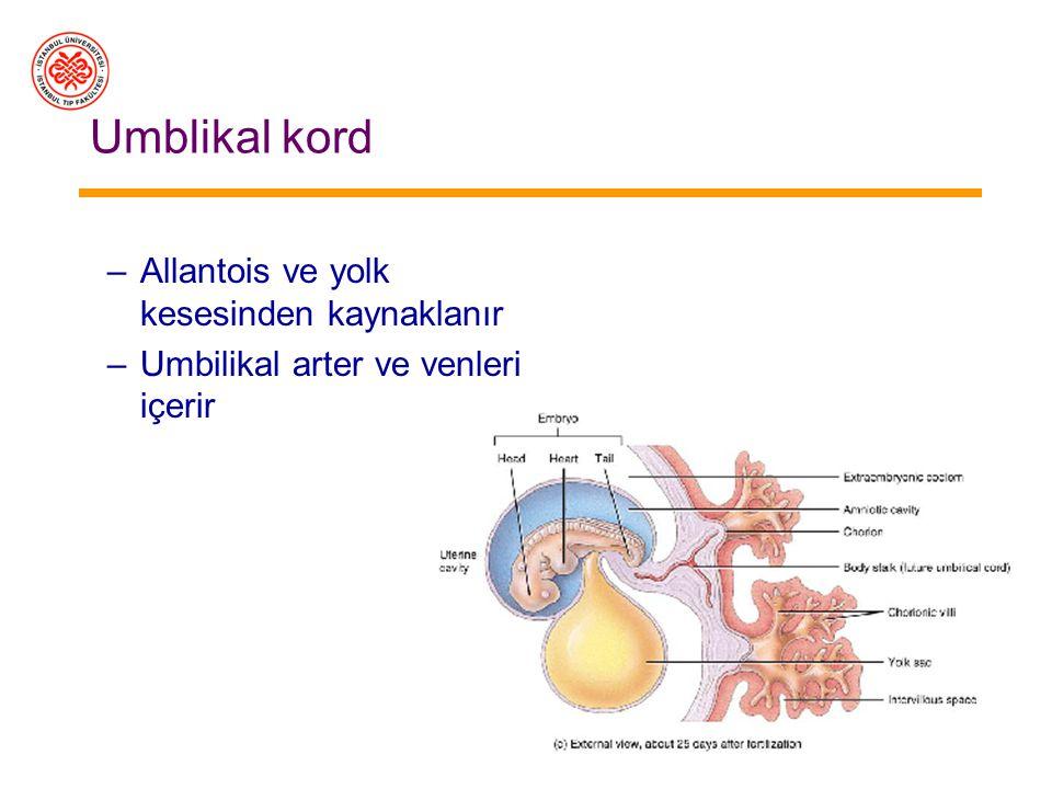 Plasenta Koryon ve endometriyumdan köken alır Koryon villusları Maternal sinüsler –İmplantasyondan yaklaşık 1 hafta sonra plasenta gelişmeye ve beslen