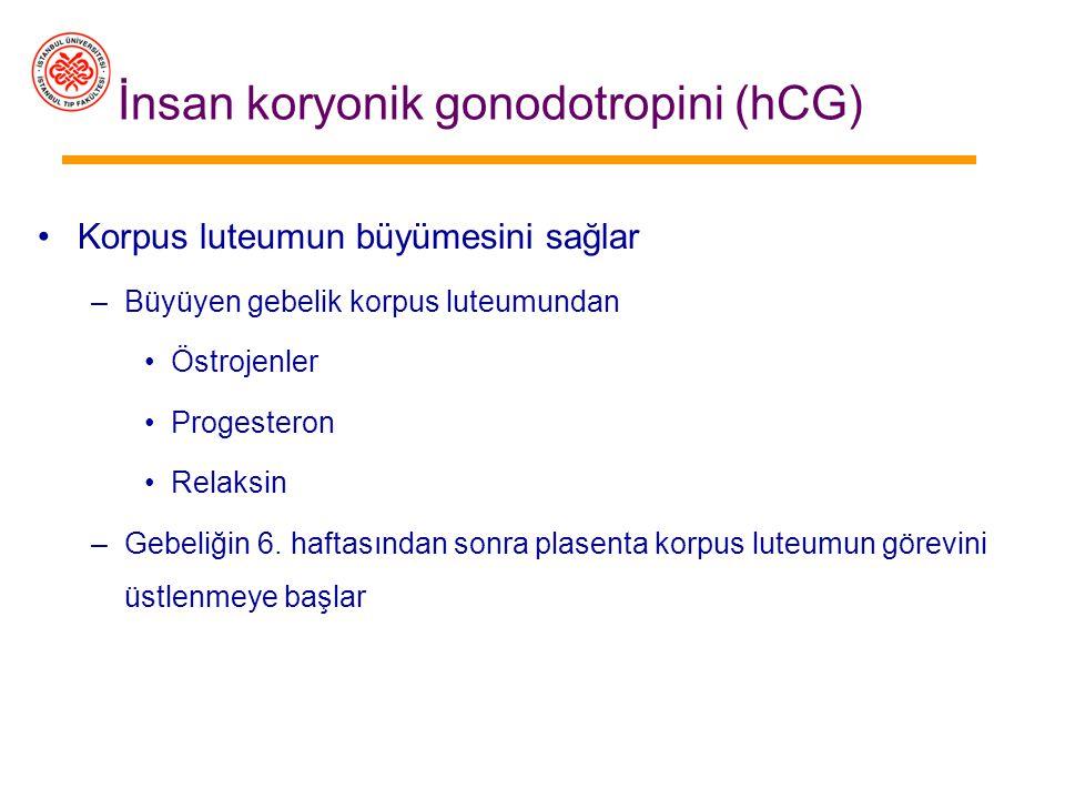 İnsan koryonik gonodotropini (hCG) Annede gebeliğin oluştuğunu gösterir –Modern gebelik testleri idrardaki (14. gün) veya kandaki (6. gün) hCG varlığı