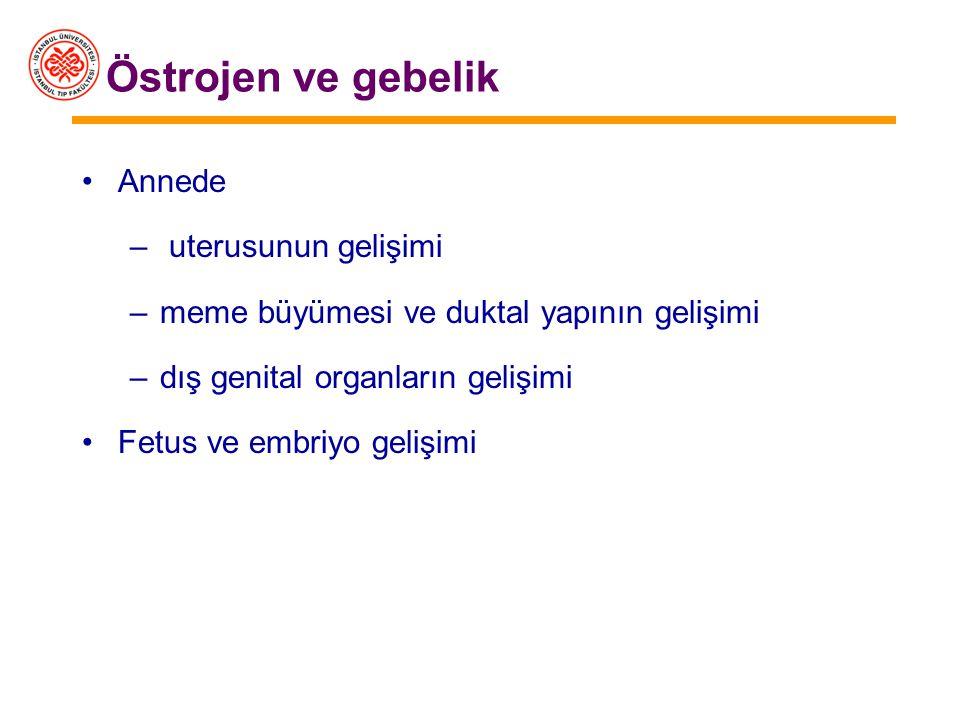 –Östradiol –Ovaryum ve plasentada üretilir –Östriol –Sadece plasentada üretilir –Gebelikte dolaşımdaki östrojenin büyük bölümünü oluşturur –Düzeyi fet