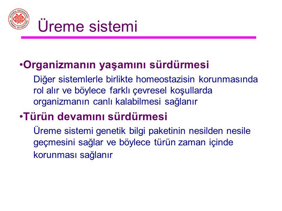 Erkek üreme sistemi işlevleri 1.Spermatogenez 2.Erkek üreme işlevlerinin hormonlarla düzenlenmesi 3.Cinsel işlem performansı