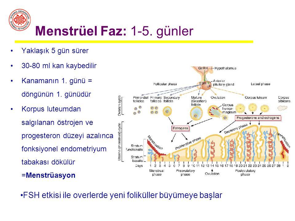 Menstrüel Faz Pre-ovulatuvar Faz Post-ovulatuvar Faz Uterus (endometriyum kalınlığı) Uterin/Endometriyal/Menstrüel Siklüs