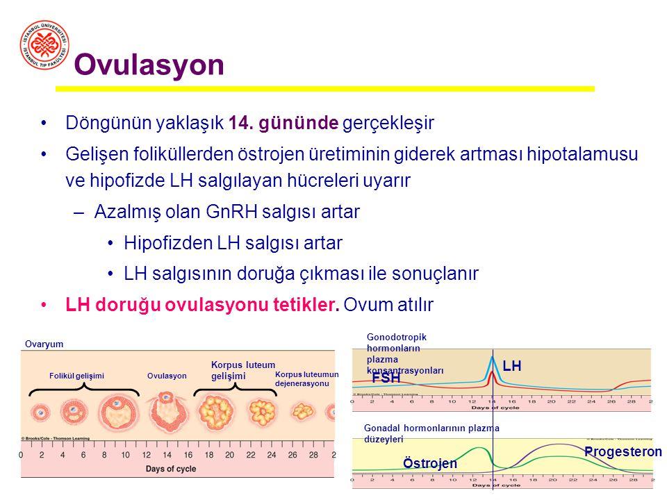 Pre-ovulatuvar Faz: 6-14. günler Menstrüasyon ile ovulasyon arasındaki süreç FSH yeni foliküllerin gelişmesini sağlar = foliküler faz / over Olgunlaşa
