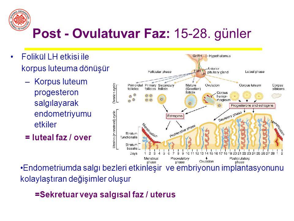 Döngünün yaklaşık 14. gününde gerçekleşir Gelişen foliküllerden östrojen üretiminin giderek artması hipotalamusu ve hipofizde LH salgılayan hücreleri